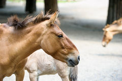 Funny horse Royalty Free Stock Photography