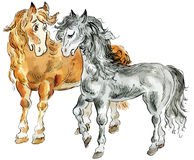 Funny horses couple. Illustration Royalty Free Stock Image