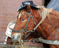 Funny horses in harness with the hats Royalty Free Stock Photos