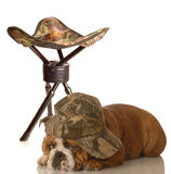 Funny hunting dog Royalty Free Stock Photos