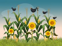 Field of panicles. Funny illustration of field of panicles and sunflowers Royalty Free Stock Image