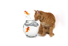 Funny Image of Cat Watching Royalty Free Stock Photos