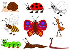 Funny insect Royalty Free Stock Image