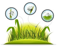Funny Insect Character Inside Spring Grass Royalty Free Stock Photos