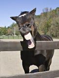 Funny Joke. Horse wtih a sense of humor Royalty Free Stock Image