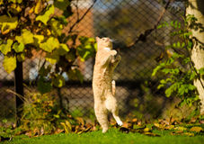 Funny jumping cat. On green grass Stock Photo