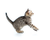 Funny jumping cat kitten Stock Photo