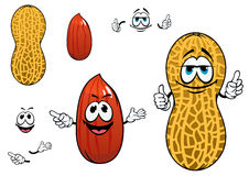 Funny kernel and pod of peanut characters. Funny cartoon peanuts characters with dried kernel in brown seed coat and whole legume fruit in yellow pod Stock Photos