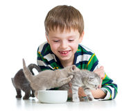 Funny kid boy feeding attractive cats kittens Stock Photos