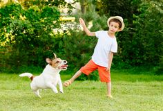 Funny kid boy throws stick to his dog playing fetch game. Jack Russell Terrier dog playing with a child at backyard stock photography