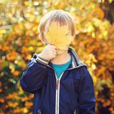Funny kid hide his face behind yellow maple leaf. Autumn time. P stock image