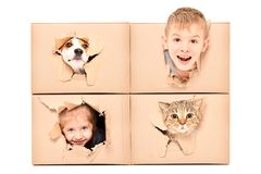 Funny kids and pets looking out of a torn hole in a box royalty free stock photos