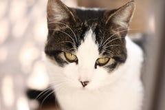 Funny kitten Stock Images