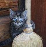 Funny kitten. A picture of lovely kitten playing with broom stock images