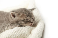 Funny kitten Stock Image