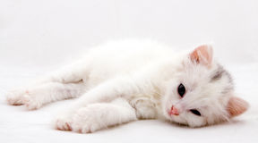 Funny kitten. On a white background Stock Photography