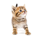 Funny kitten Stock Images