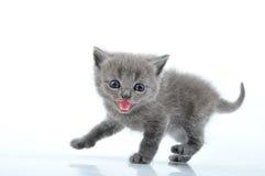 Funny kitten Royalty Free Stock Photography