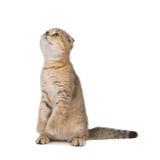 Funny kitten stock photography