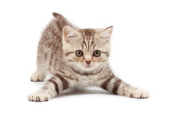 Funny kitten. Isolated over white Royalty Free Stock Image