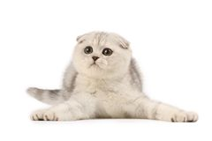 Funny kitten Royalty Free Stock Photos
