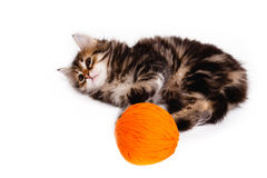 Funny kitten and ball of thread on white Royalty Free Stock Images
