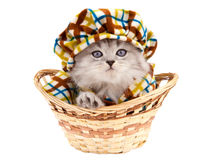 Funny kitten in a basket. Isolated on white backgound Stock Photos