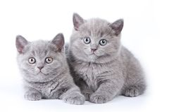 Free Funny Kitten British Cat Royalty Free Stock Images - 118140939
