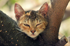 Funny kitten. Cat find himself in a funny position Stock Images