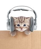 Funny Kitten Cat In Headphones In Cardboard Box Royalty Free Stock Image