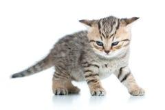 Funny kitten cat Stock Photography