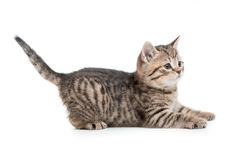 Funny kitten cat ready to jump isolated Stock Images