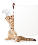 Funny kitten in cook hat holding menu blank. Isolated Royalty Free Stock Images