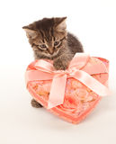 Funny kitten with gift box Royalty Free Stock Photo