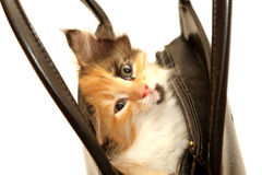 Funny kitten in handbag isolated on white Royalty Free Stock Photos