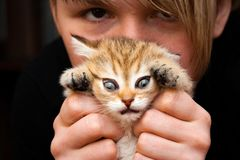 Funny kitten in the hands of a woman stock images