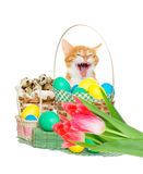 Funny kitten Happy Easter Stock Photos