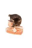Funny kitten in heart-shaped box. Isolated on white Royalty Free Stock Photography