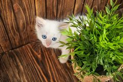 Funny kitten with houseplant indoors royalty free stock photos