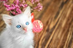 Funny kitten with houseplant indoors stock images