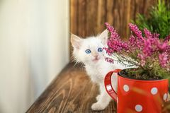 Funny kitten with houseplant indoors royalty free stock photography