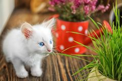 Funny kitten with houseplants indoors stock photography