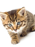 Funny kitten isolate in white Royalty Free Stock Photography