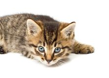 Funny kitten isolate in white Royalty Free Stock Photos