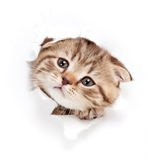 Funny kitten looking out hole in torn paper. Funny small cat looking out hole in torn paper stock image