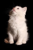 Funny kitten looks up Royalty Free Stock Photo