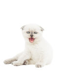 Funny kitten mews Stock Photo