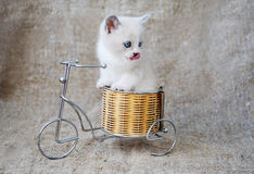 Funny kitten pampered. Kitten on a bicycle on a background of burlap Royalty Free Stock Images