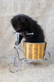 Funny kitten pampered. Kitten on a bicycle on a background of burlap Stock Photography