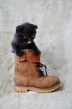 Funny kitten pampered. Black kitten in a brown boot Royalty Free Stock Photos